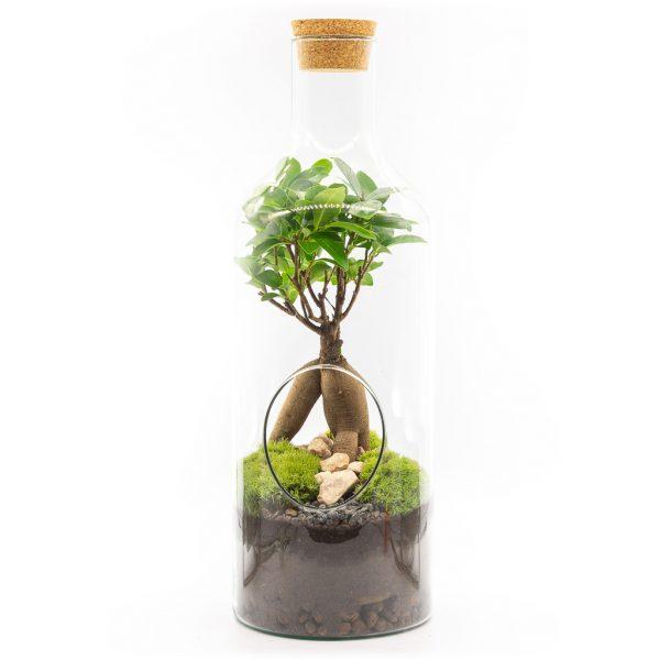 las w sloiku fikus mini