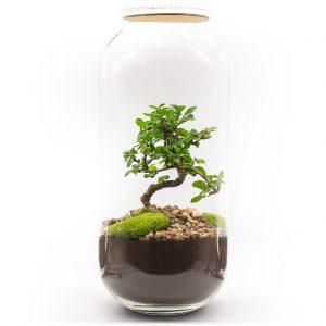 las w sloiku karmona drobnolistna xxl