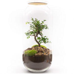 las w sloiku wiaz drobnolistny xxl