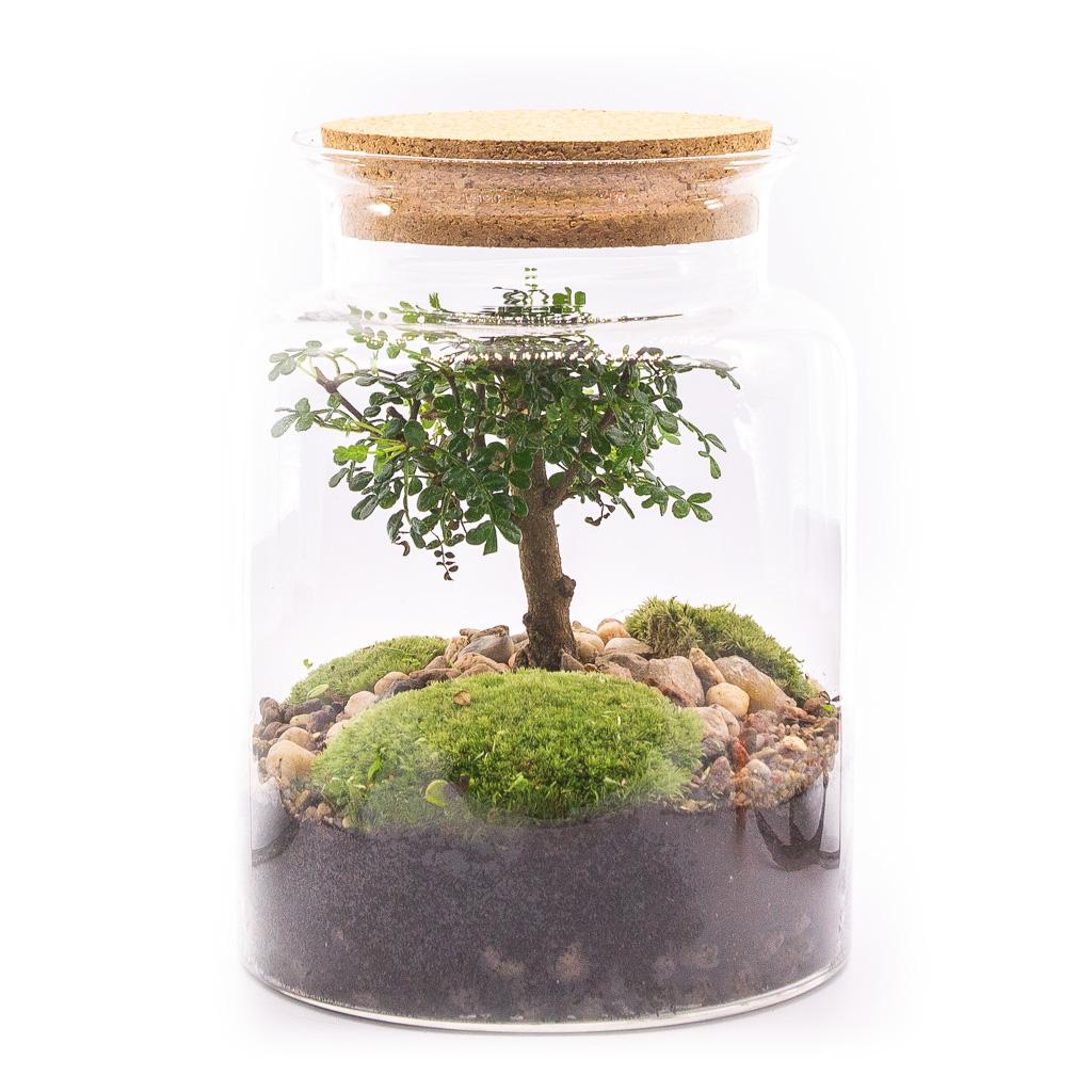 Las w słoiku M – Pieprzowiec