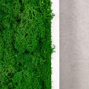 obraz z mchu