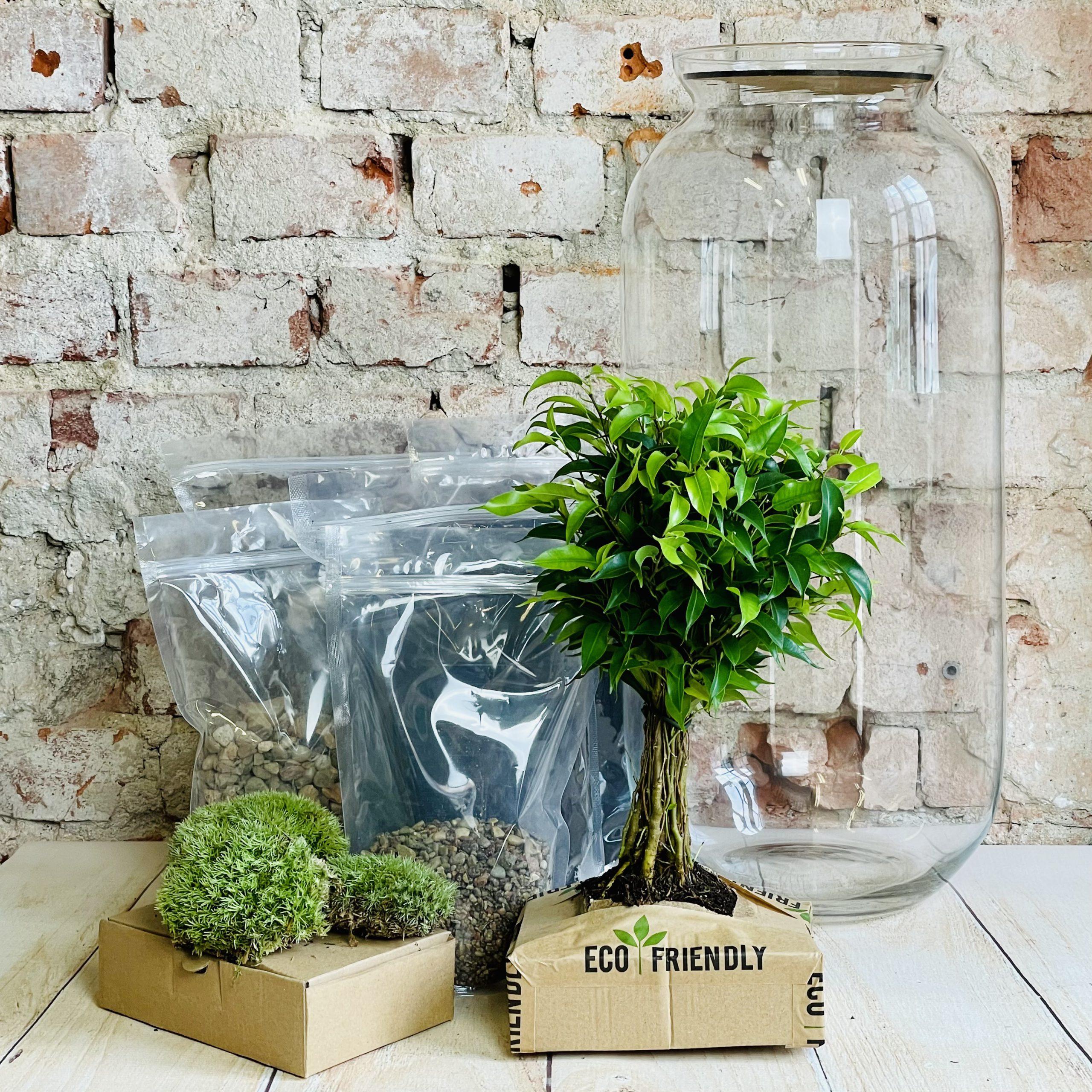 Zestaw DIY – Las w słoiku XXL – Ficus Benjamina